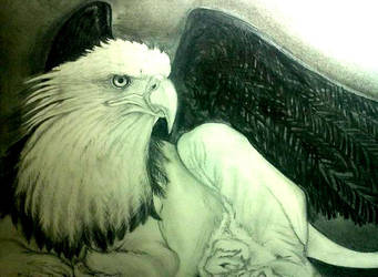The Griffin by Schkoda