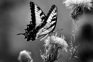 Butterfly by lemmonade42