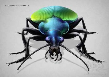 Calosoma sycophanta by jrtracey
