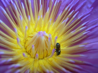 flower and bee by ghaniarasyid
