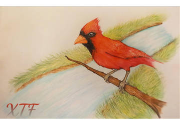 Cardinal by Xavierstrong