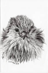 Inktober 2018 drawing 9- hawk chick by MsAlayniousCreations