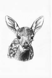 Inktober 2018 drawing 12- Sweet fawn by MsAlayniousCreations