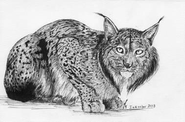 Inktober 2018 drawing 13- Lynx by MsAlayniousCreations