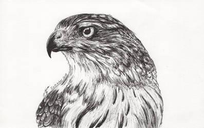 Inktober 2018 drawing 28- Hawk by MsAlayniousCreations