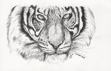 Inktober 2018 drawing 25- Tiger by MsAlayniousCreations