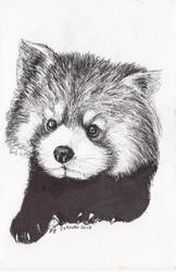 Inktober 2018 drawing 26- red panda by MsAlayniousCreations