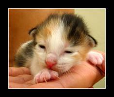 Baby Meow by scorpion2kpk
