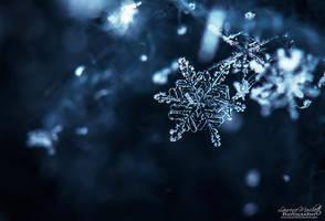Falling snow by Gallynette
