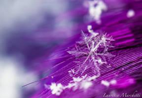 Subtle delicateness by Gallynette