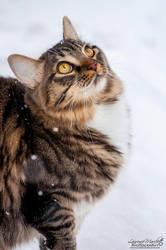 Snow-gazing by Gallynette
