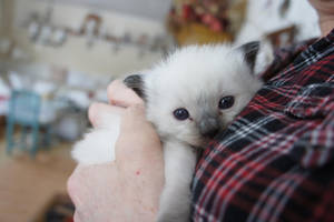 Tiny Fluff by Escaron