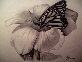 Butterflower by boy140495
