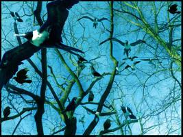 Birds by Effendacious