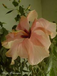 Beautiful flower by Maja-Nuissance