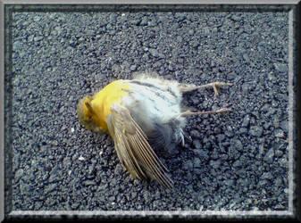 Dead bird by Maja-Nuissance