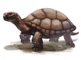 NATGEO Ind:Turttle by ekoputeh