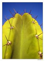 I'm just a cactus by unicolored