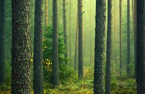 Green Forest by JoniNiemela
