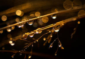 Drops by JoniNiemela