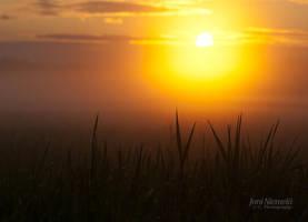 Drops On Grasses by JoniNiemela
