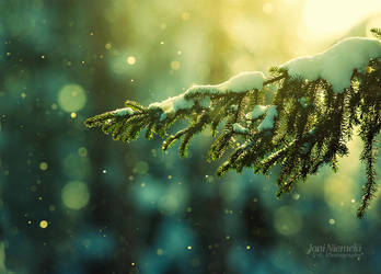Pine Needles In The Snowfall by JoniNiemela