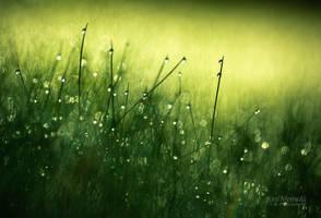 Morning Dew III by JoniNiemela