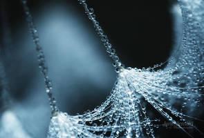 Dandelion Dew - Blue by JoniNiemela