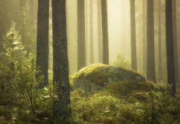 Middle Of Pine Trees V2 by JoniNiemela