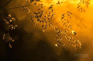 Golden Light by JoniNiemela