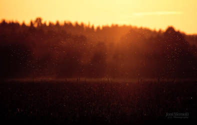 Gold Dust by JoniNiemela