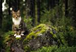 Vili In The Forest by JoniNiemela