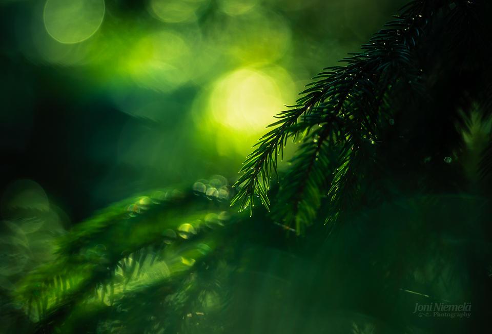 Green Light by JoniNiemela