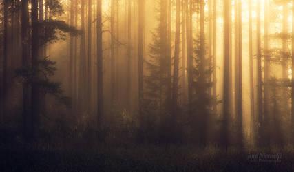 Foggy Pine Forest II by JoniNiemela