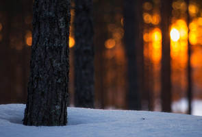 Sunset In The Forest by JoniNiemela