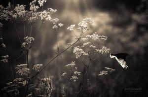 Flight by JoniNiemela