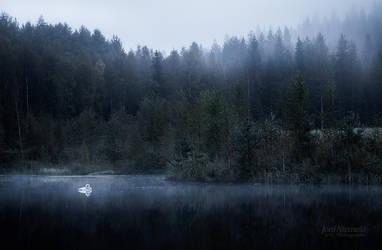 Morning Swan by JoniNiemela