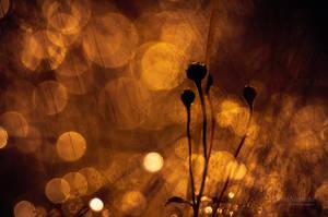 Golden Autumn II by JoniNiemela