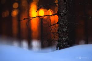 Sunset In Forest by JoniNiemela
