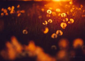 Second Bloom by JoniNiemela