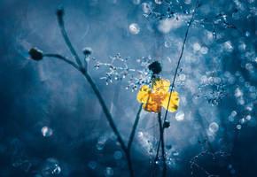 Autumn Buttercup by JoniNiemela
