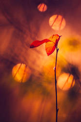 Leafs Of Autumn by JoniNiemela