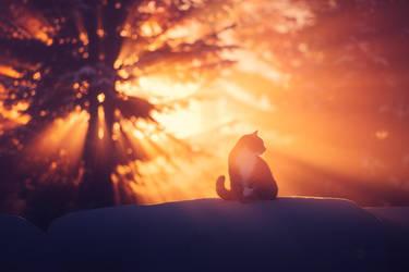 Cat In The Winter Mist by JoniNiemela