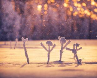 Winter Celebrators by JoniNiemela