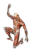 anatomy by Jubran