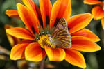 Flower with butterfly by picture-melanie
