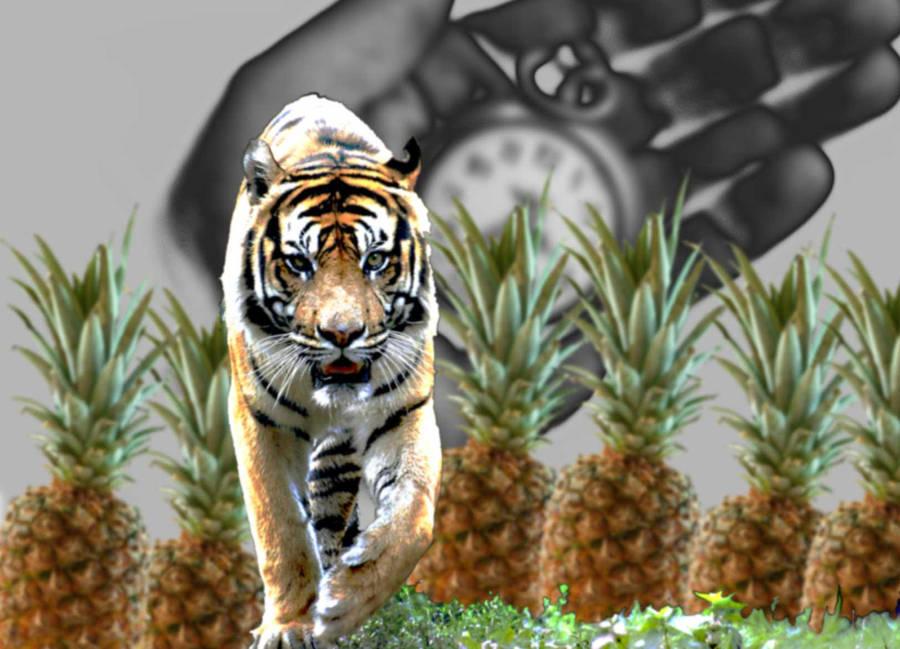 Cat, Watch, Fruit1 geezerdk by geezerdk