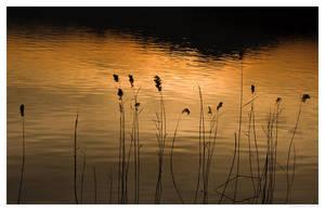 golden black lake by zero-