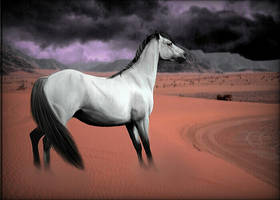 HEE #5 Silver Grulla In Storm by CrystalSong-Acres