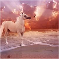 sunset shagya by glitchHP